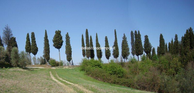 Montrappoli: Esempio Di Strada Agricola Storica