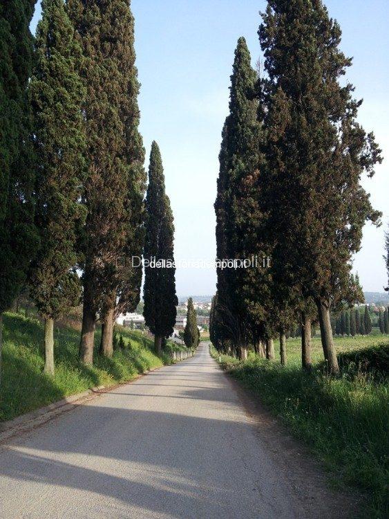 Viali Dei Cipressi Vicino La Villa Alessandri A Petroio